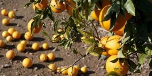 Naranjas aislante acústico